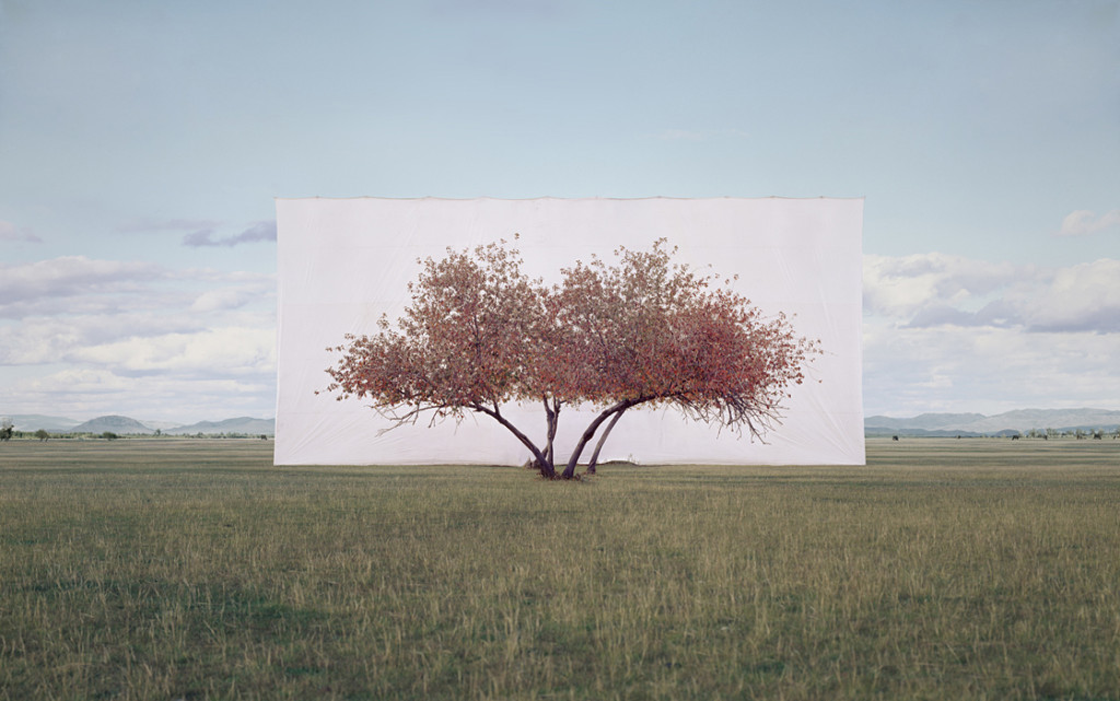 unexpected_myoung_ho_lee-tree_2-2011