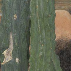 Van verbazing naar verbazing in het Dhondt-Dhaenens museum