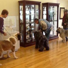 Honden toegelaten in het SMAK
