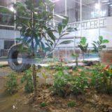 Tropisch regenwoud gespot in Kemzeke