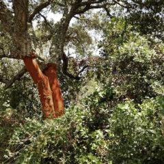 Arteventura, een ecologische kunstenaarsresidentie in het Spaanse binnenland