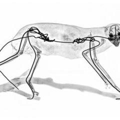 De binnenkant der dingen… SciArtist Marc Dantan's reeks XRAY COMPAGNY bij Alter Ego Gallery