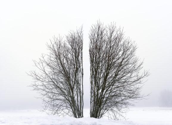 De ontdekking van een Finse kunstparel: Antti Laitinen