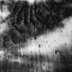 Balanceren tussen fotografie en tekenkunst: een blik op het werk van Ann-Sophie Deproost