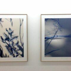 Arcadia: boeiend talent te ontdekken bij HUSK Gallery – Expoflits #27